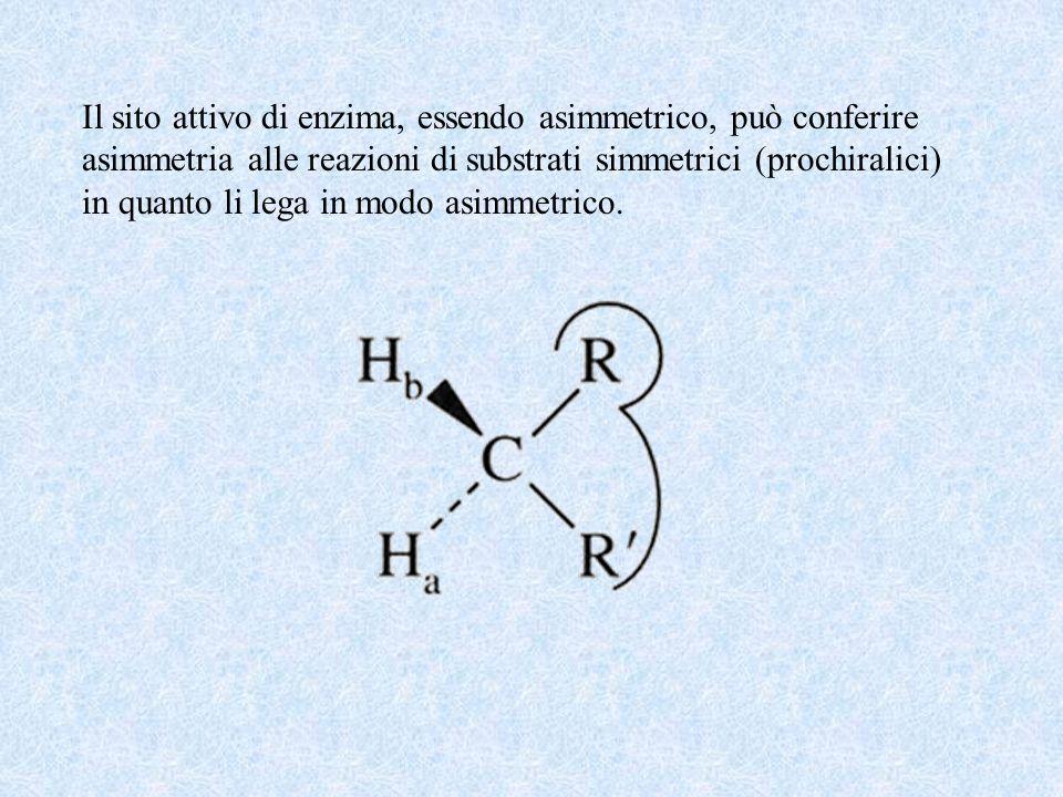 Il sito attivo di enzima, essendo asimmetrico, può conferire