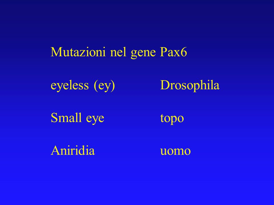Mutazioni nel gene Pax6 eyeless (ey) Drosophila Small eye topo Aniridia uomo
