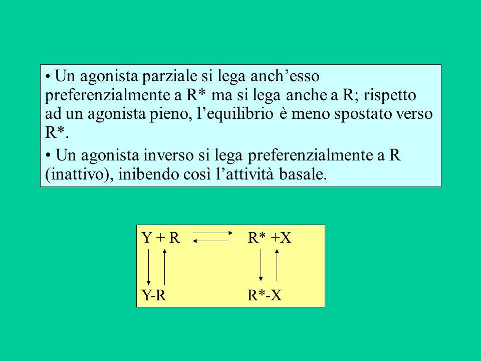 Un agonista parziale si lega anch'esso preferenzialmente a R