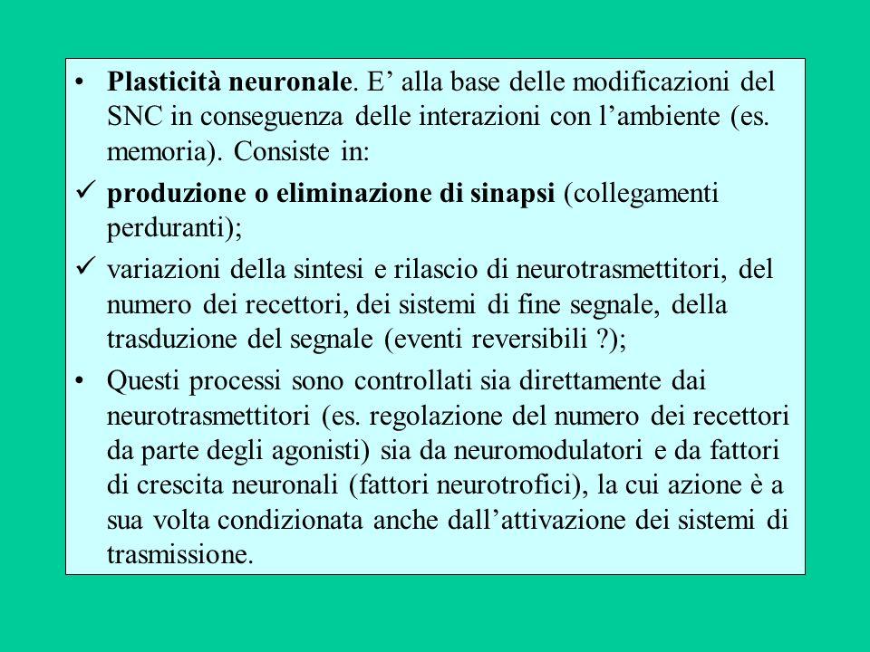 Plasticità neuronale. E' alla base delle modificazioni del SNC in conseguenza delle interazioni con l'ambiente (es. memoria). Consiste in: