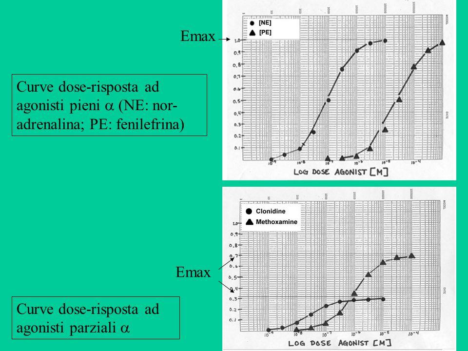 Emax Curve dose-risposta ad agonisti pieni  (NE: nor-adrenalina; PE: fenilefrina) Emax.