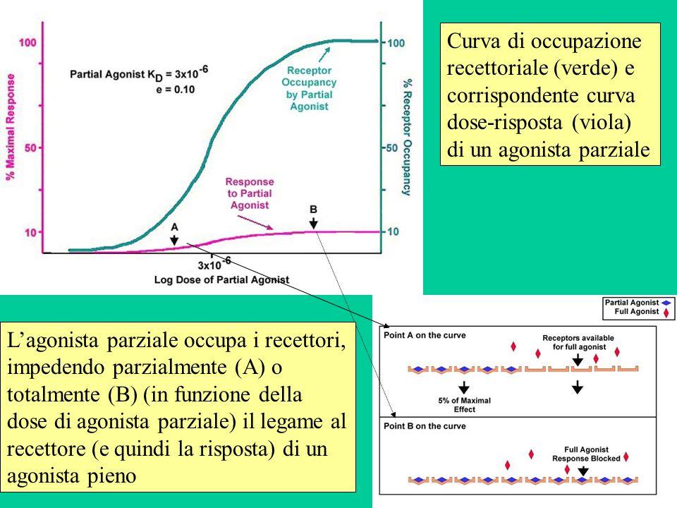 Curva di occupazione recettoriale (verde) e corrispondente curva dose-risposta (viola) di un agonista parziale