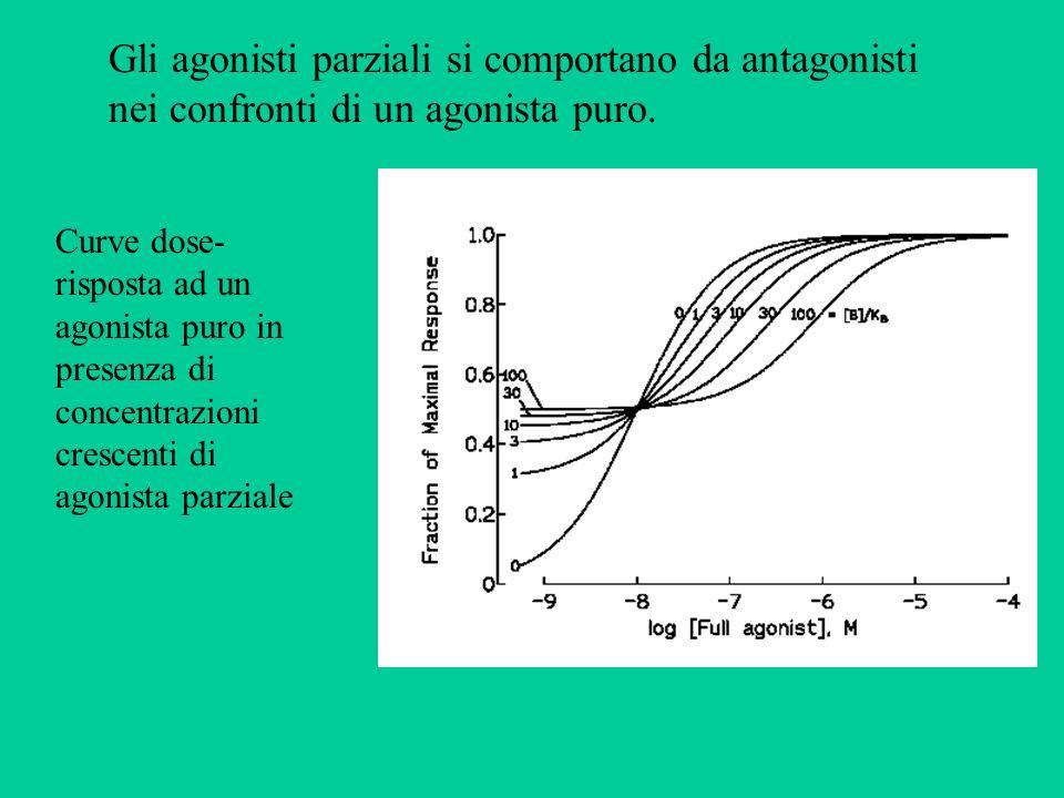 Gli agonisti parziali si comportano da antagonisti nei confronti di un agonista puro.