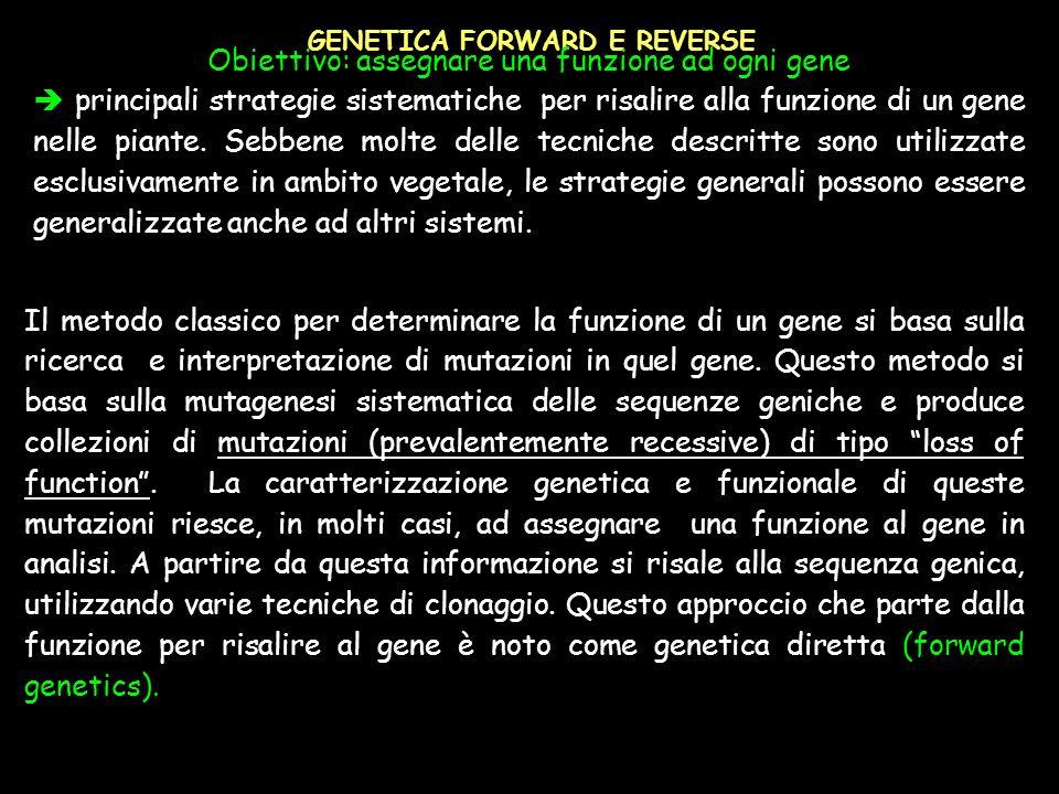 Obiettivo: assegnare una funzione ad ogni gene