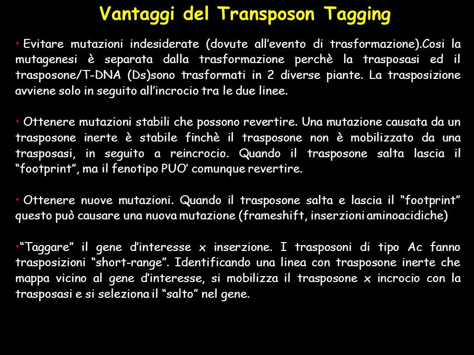 Vantaggi del Transposon Tagging