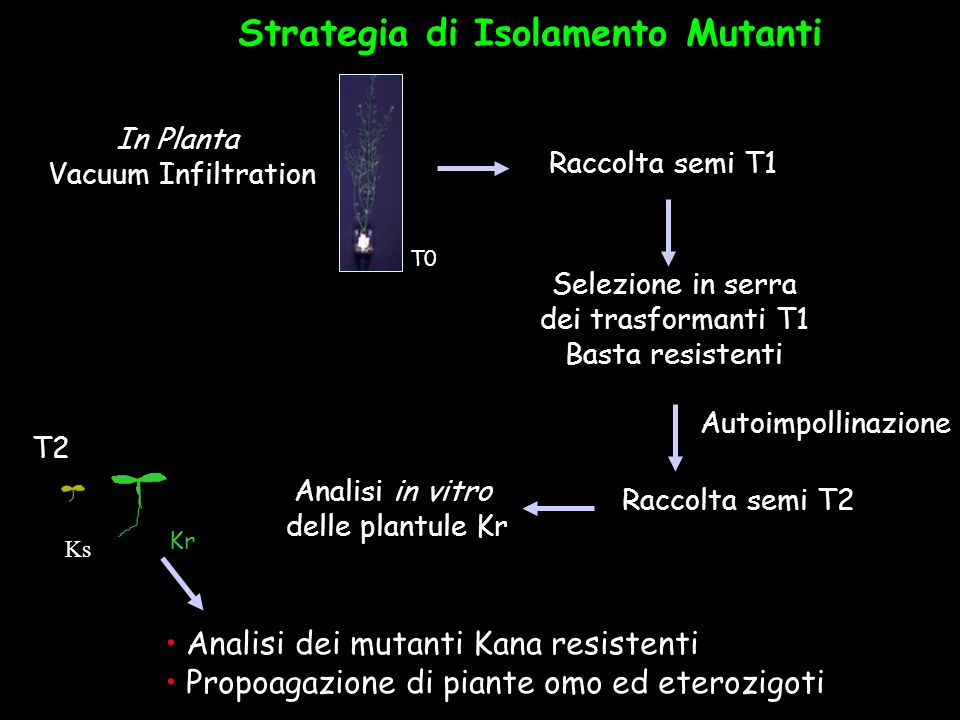 Strategia di Isolamento Mutanti