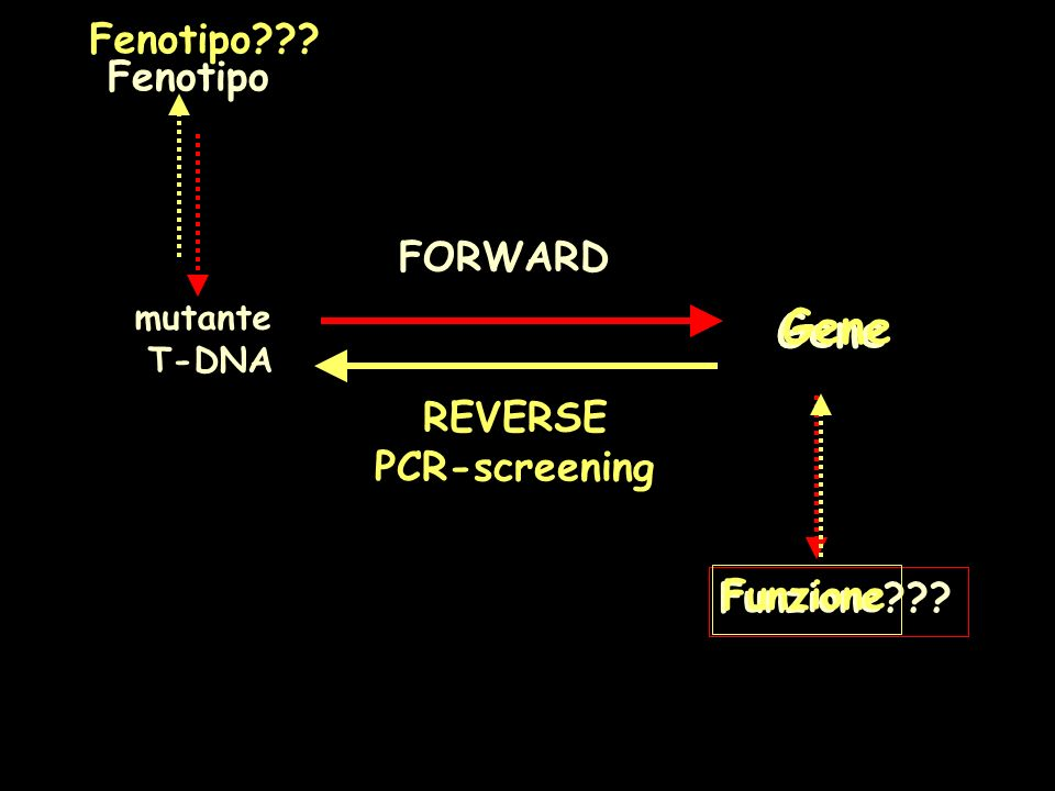 Gene Gene Fenotipo Fenotipo FORWARD REVERSE PCR-screening