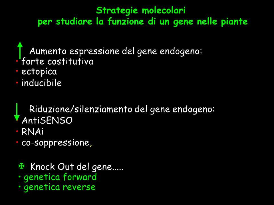 per studiare la funzione di un gene nelle piante