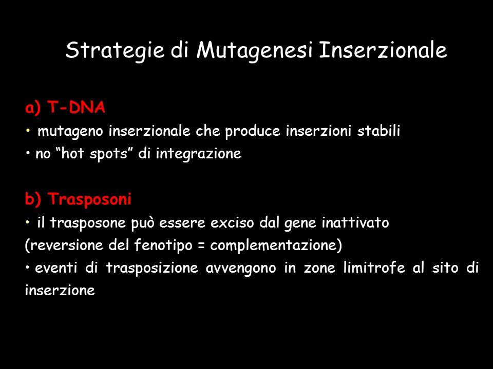 Strategie di Mutagenesi Inserzionale