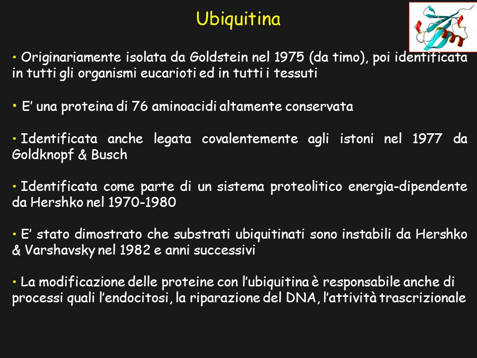 Ubiquitina E' una proteina di 76 aminoacidi altamente conservata