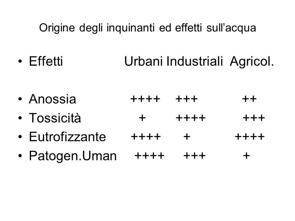 Origine degli inquinanti ed effetti sull'acqua