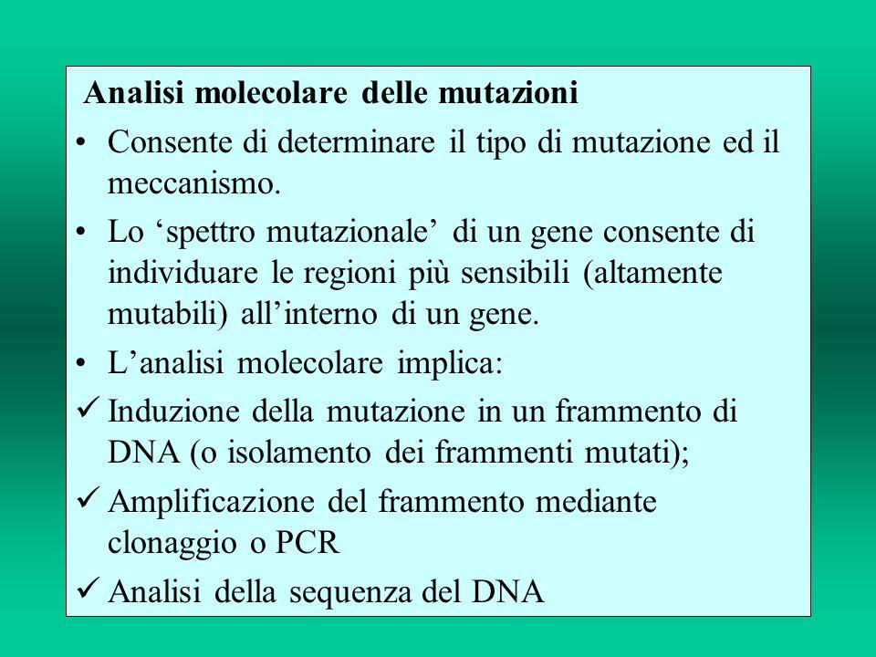Analisi molecolare delle mutazioni