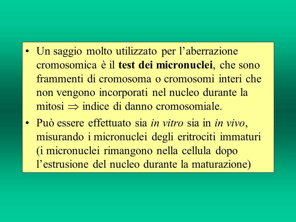 Un saggio molto utilizzato per l'aberrazione cromosomica è il test dei micronuclei, che sono frammenti di cromosoma o cromosomi interi che non vengono incorporati nel nucleo durante la mitosi  indice di danno cromosomiale.
