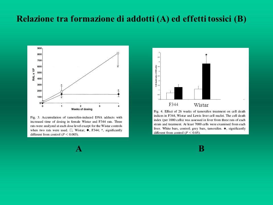 Relazione tra formazione di addotti (A) ed effetti tossici (B)