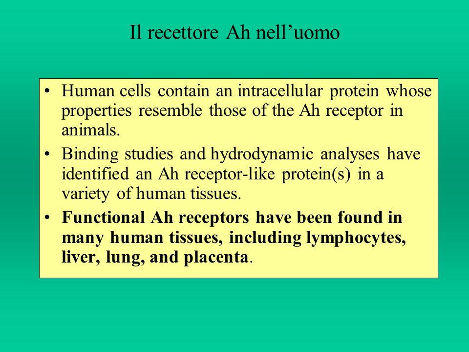 Il recettore Ah nell'uomo