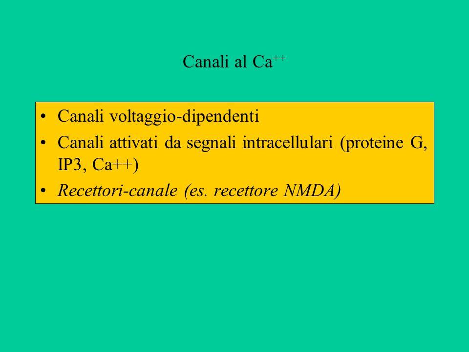 Canali al Ca++ Canali voltaggio-dipendenti. Canali attivati da segnali intracellulari (proteine G, IP3, Ca++)