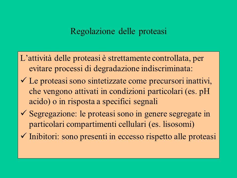 Regolazione delle proteasi