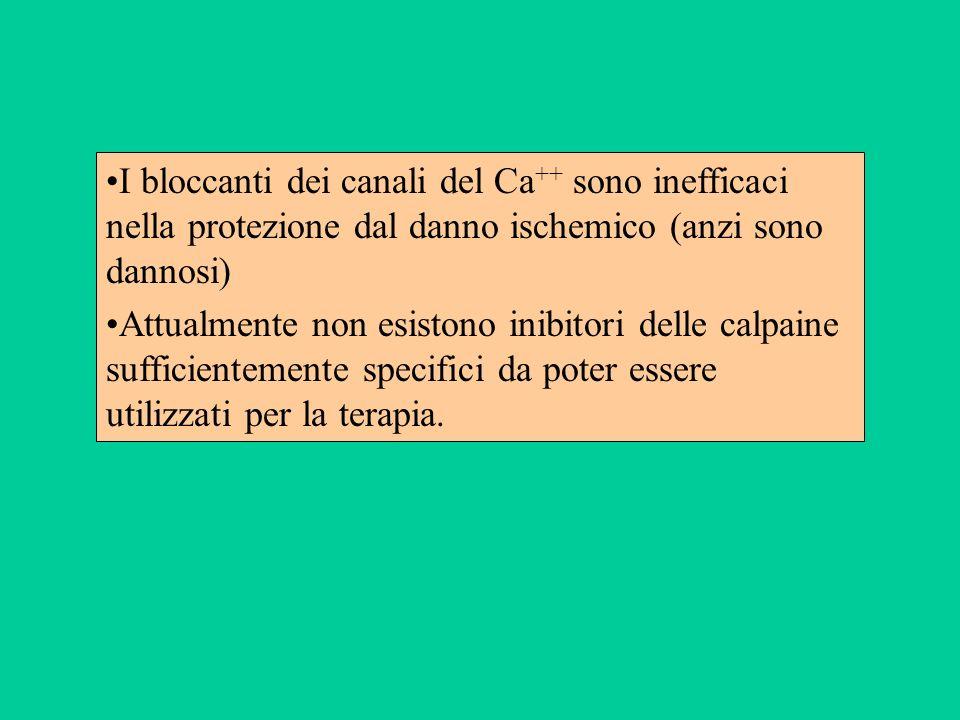 I bloccanti dei canali del Ca++ sono inefficaci nella protezione dal danno ischemico (anzi sono dannosi)