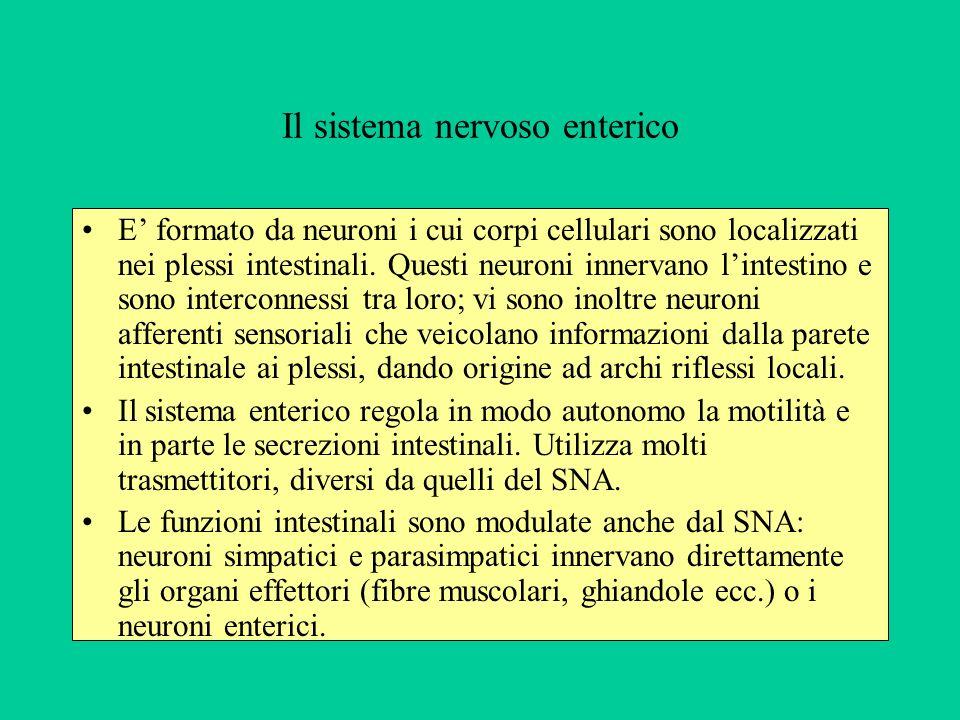 Il sistema nervoso enterico