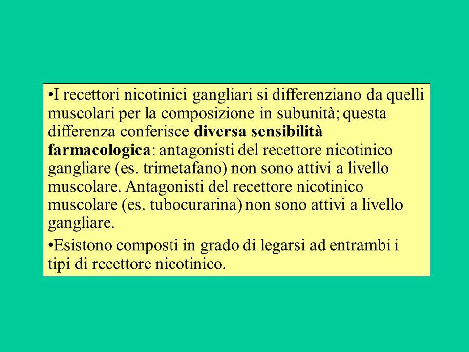 I recettori nicotinici gangliari si differenziano da quelli muscolari per la composizione in subunità; questa differenza conferisce diversa sensibilità farmacologica: antagonisti del recettore nicotinico gangliare (es. trimetafano) non sono attivi a livello muscolare. Antagonisti del recettore nicotinico muscolare (es. tubocurarina) non sono attivi a livello gangliare.