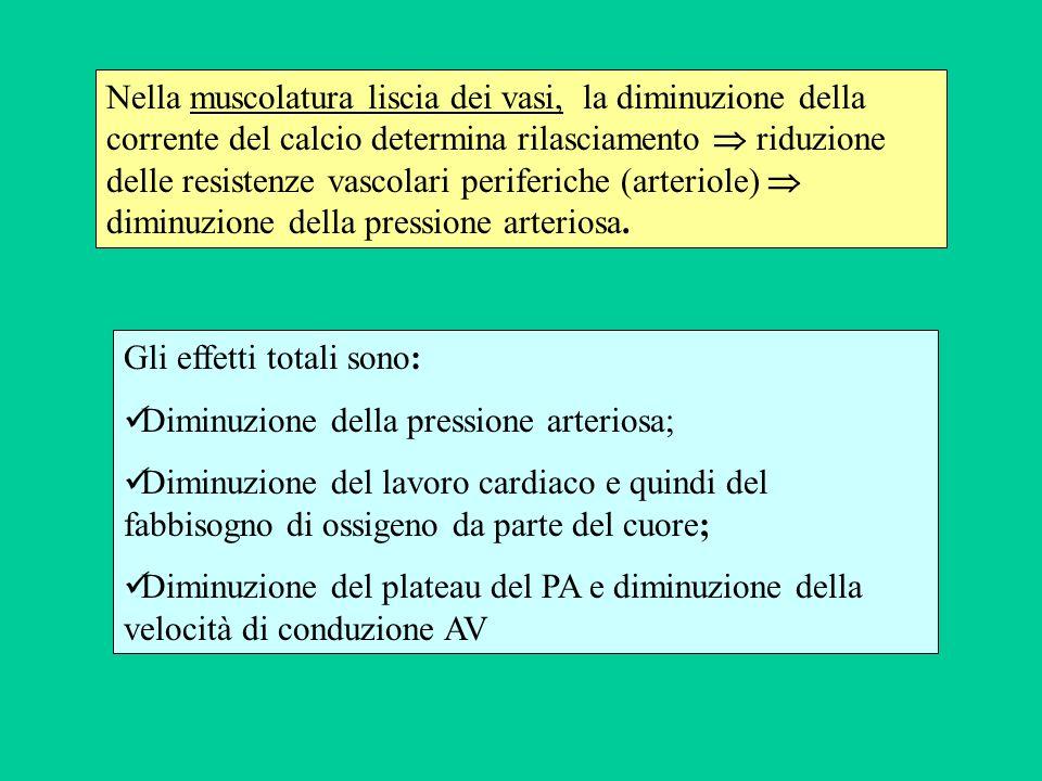 Nella muscolatura liscia dei vasi, la diminuzione della corrente del calcio determina rilasciamento  riduzione delle resistenze vascolari periferiche (arteriole)  diminuzione della pressione arteriosa.