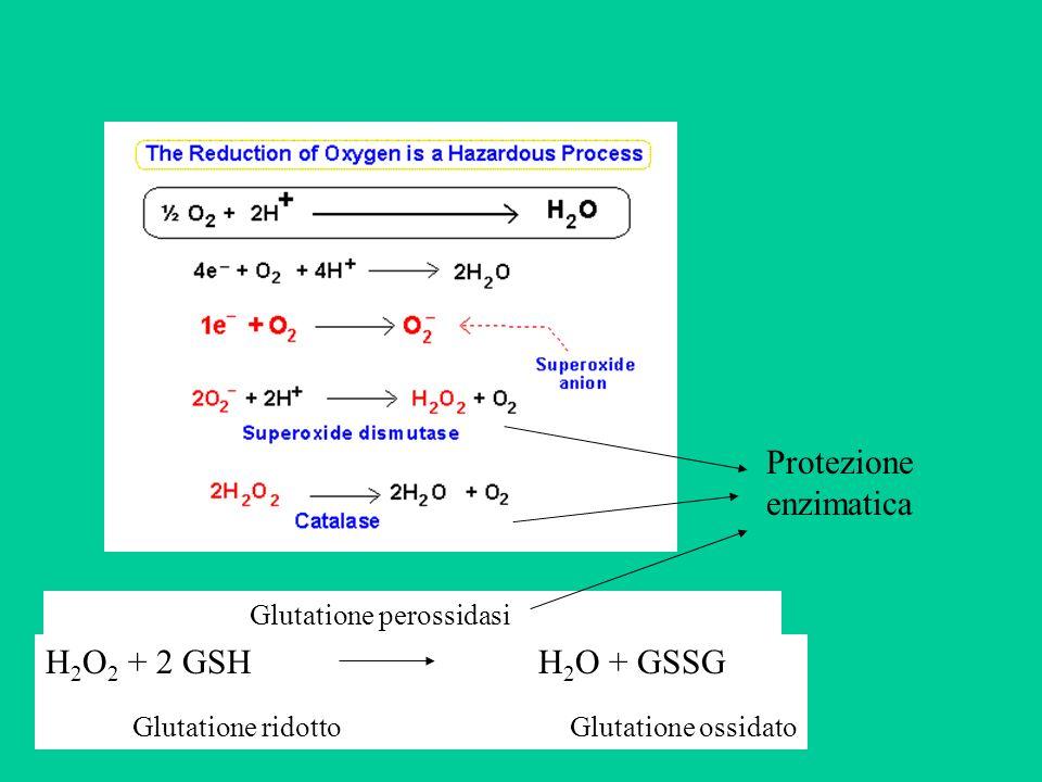 Protezione enzimatica