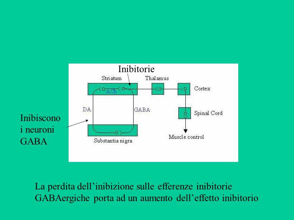 Inibitorie Inibiscono i neuroni GABA.