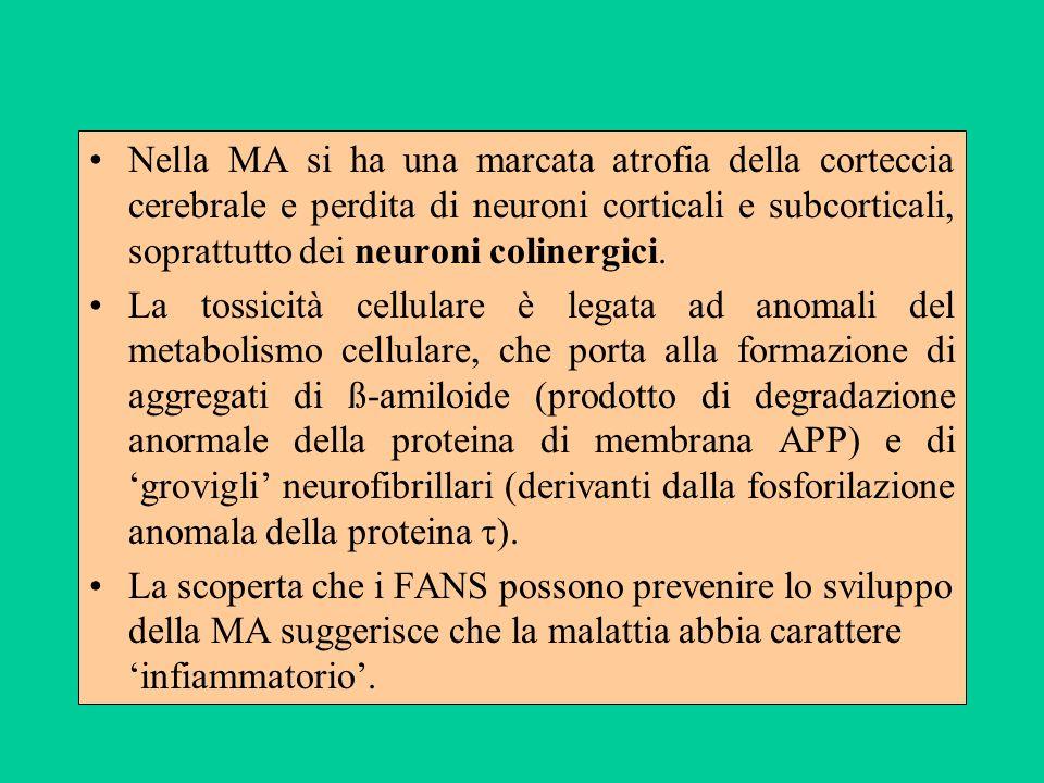 Nella MA si ha una marcata atrofia della corteccia cerebrale e perdita di neuroni corticali e subcorticali, soprattutto dei neuroni colinergici.