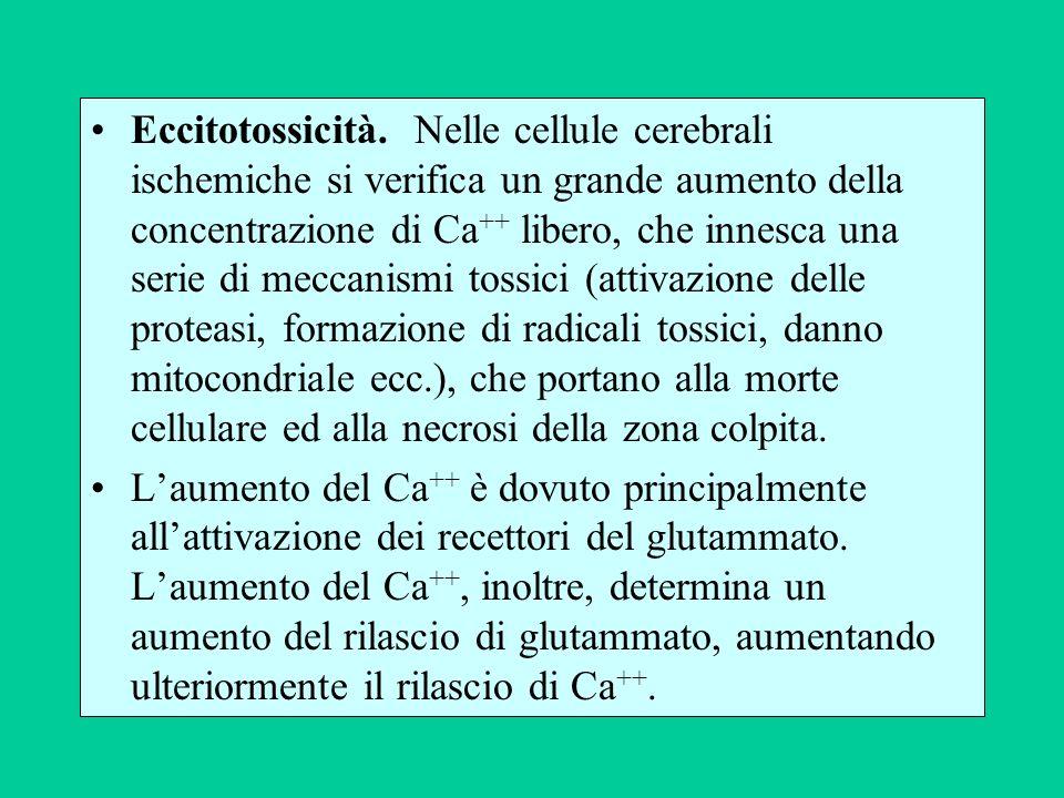 Eccitotossicità. Nelle cellule cerebrali ischemiche si verifica un grande aumento della concentrazione di Ca++ libero, che innesca una serie di meccanismi tossici (attivazione delle proteasi, formazione di radicali tossici, danno mitocondriale ecc.), che portano alla morte cellulare ed alla necrosi della zona colpita.