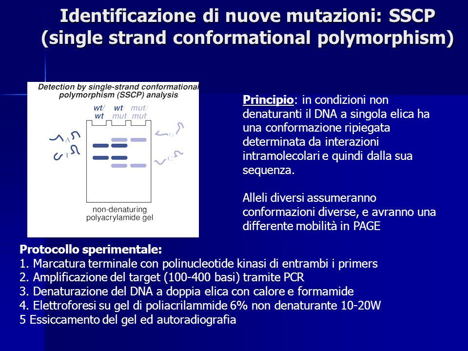 Identificazione di nuove mutazioni: SSCP (single strand conformational polymorphism)