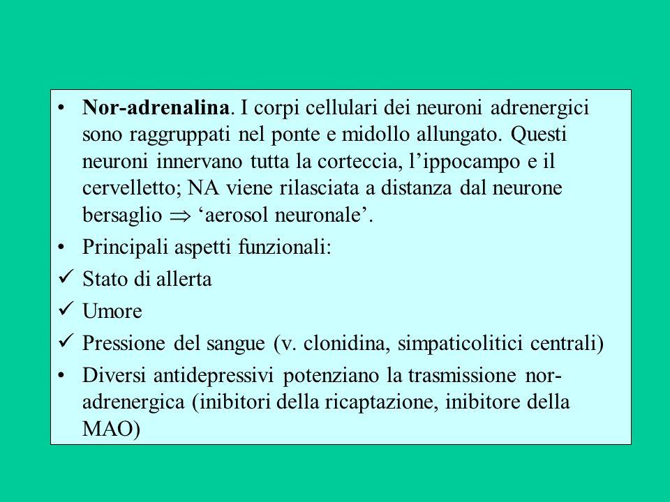 Nor-adrenalina. I corpi cellulari dei neuroni adrenergici sono raggruppati nel ponte e midollo allungato. Questi neuroni innervano tutta la corteccia, l'ippocampo e il cervelletto; NA viene rilasciata a distanza dal neurone bersaglio  'aerosol neuronale'.