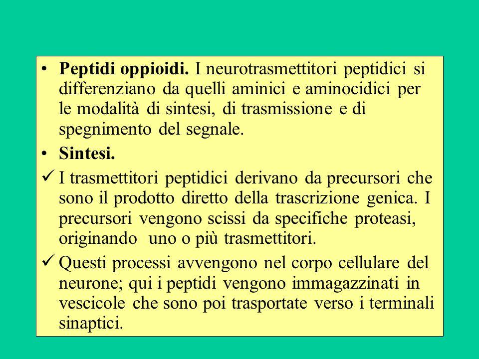 Peptidi oppioidi. I neurotrasmettitori peptidici si differenziano da quelli aminici e aminocidici per le modalità di sintesi, di trasmissione e di spegnimento del segnale.