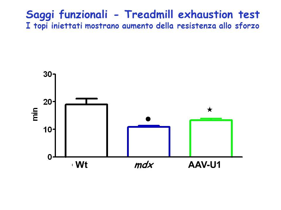 Saggi funzionali - Treadmill exhaustion test