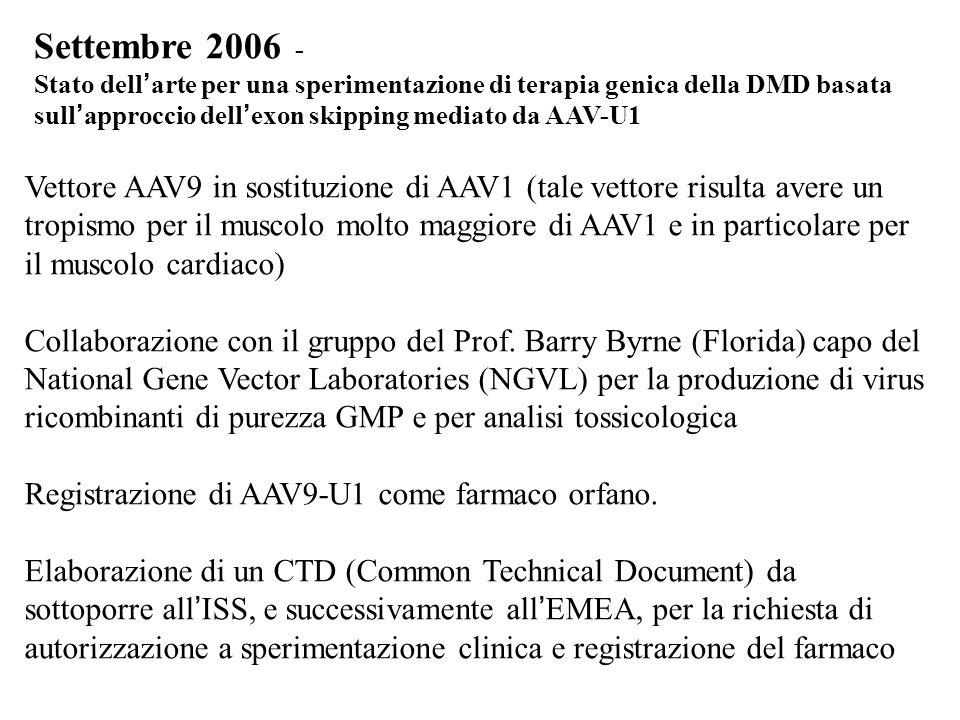 Settembre 2006 - Stato dell'arte per una sperimentazione di terapia genica della DMD basata sull'approccio dell'exon skipping mediato da AAV-U1.