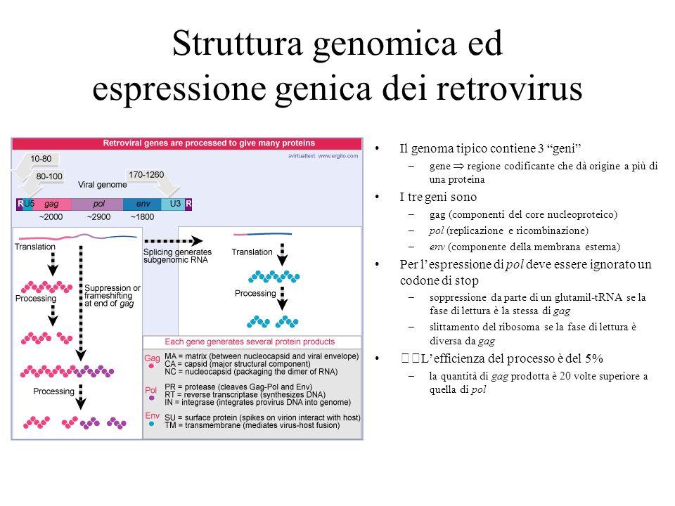 Struttura genomica ed espressione genica dei retrovirus