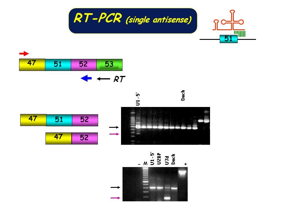 RT-PCR (single antisense)