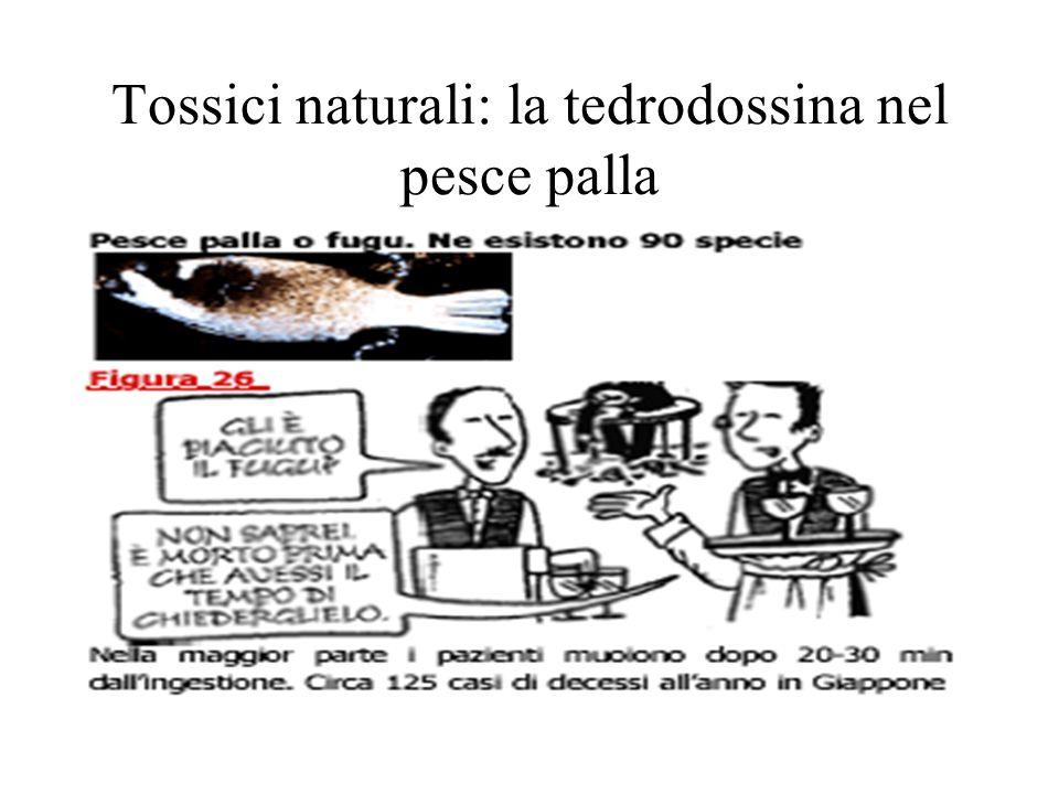 Tossici naturali: la tedrodossina nel pesce palla
