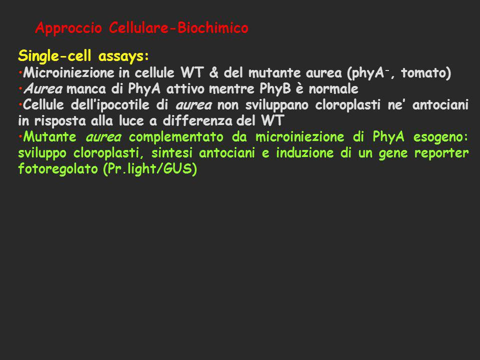 Single-cell assays: Approccio Cellulare-Biochimico