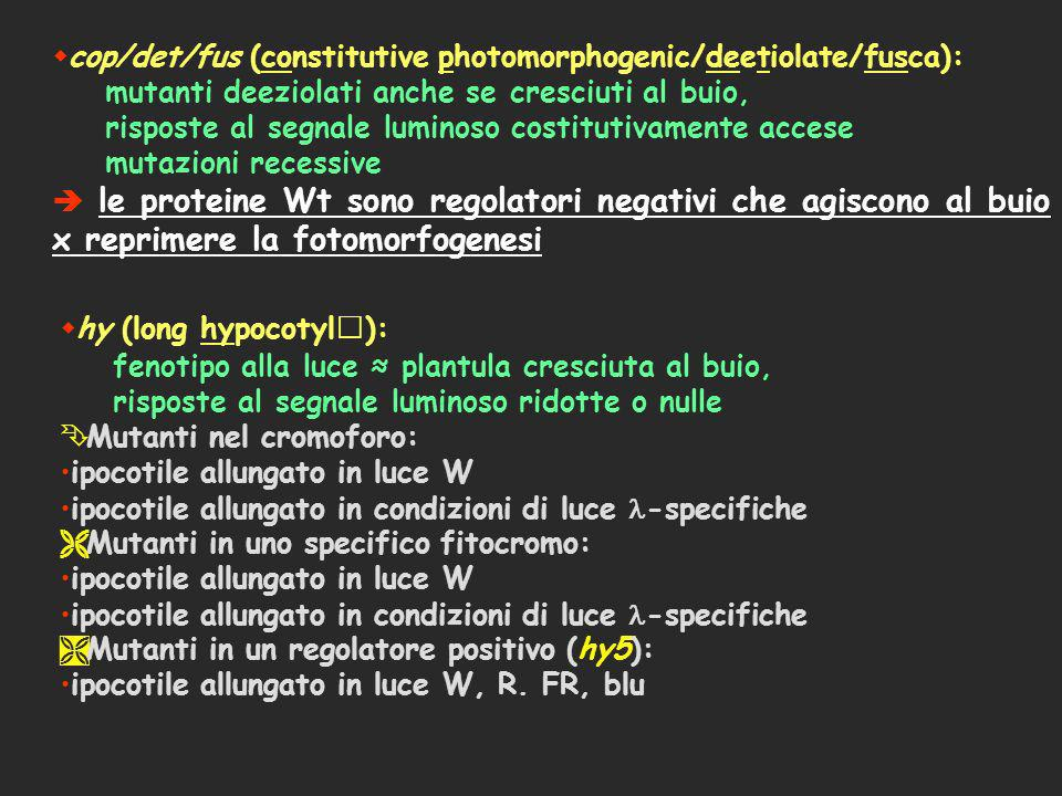 cop/det/fus (constitutive photomorphogenic/deetiolate/fusca):
