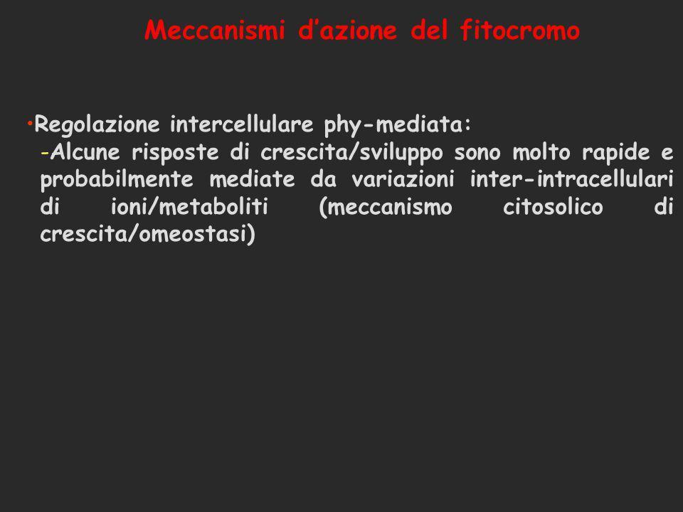 Meccanismi d'azione del fitocromo