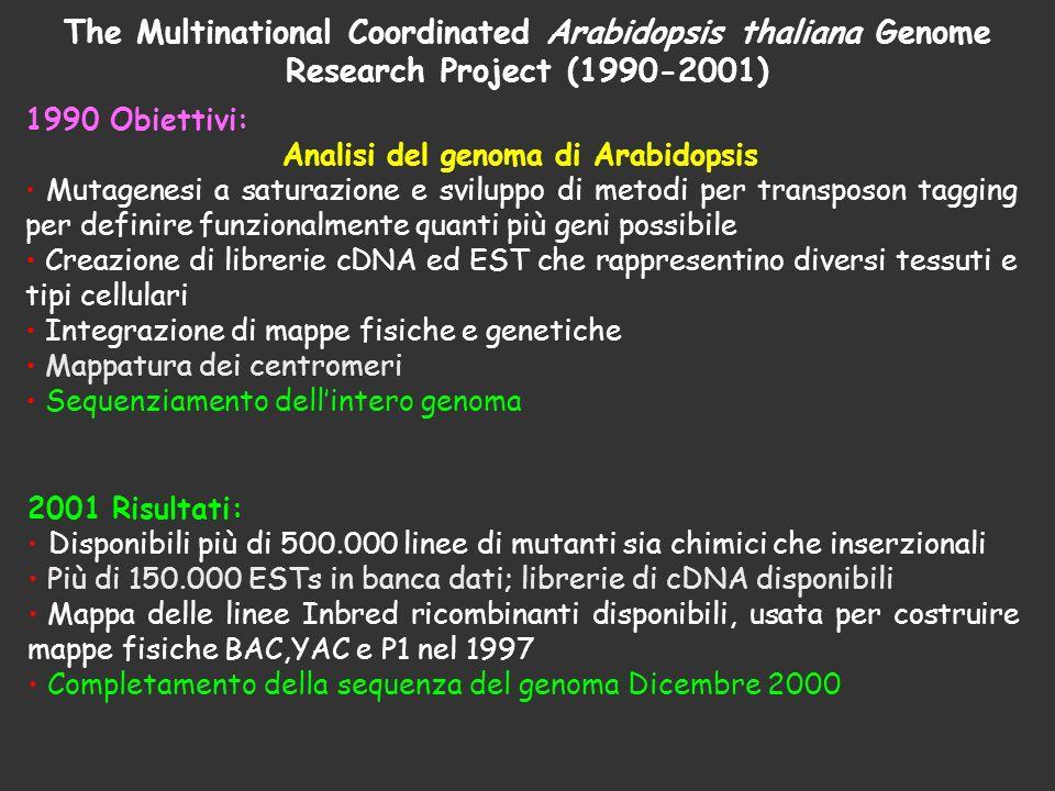 Analisi del genoma di Arabidopsis