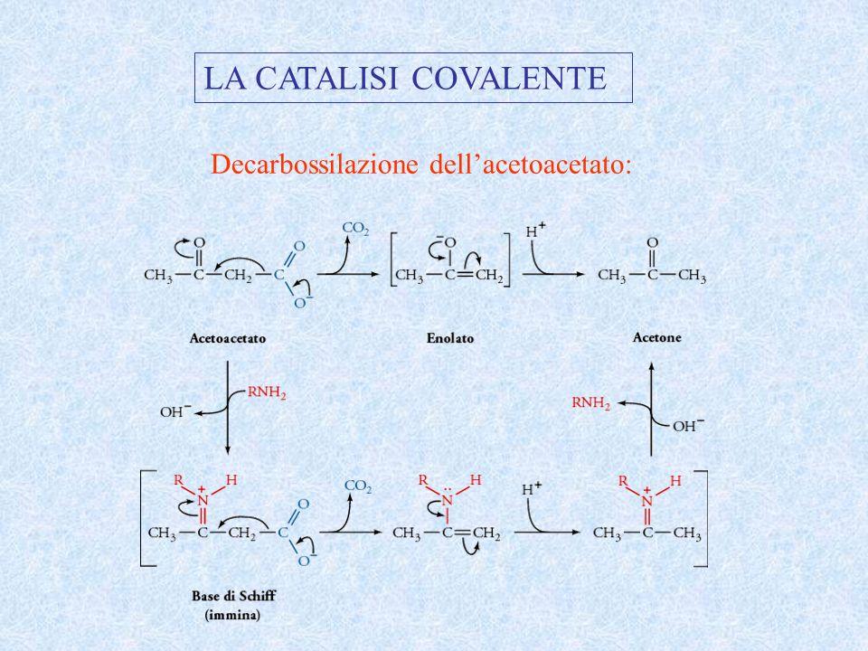LA CATALISI COVALENTE Decarbossilazione dell'acetoacetato: