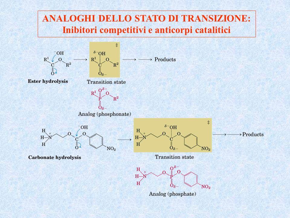 ANALOGHI DELLO STATO DI TRANSIZIONE: