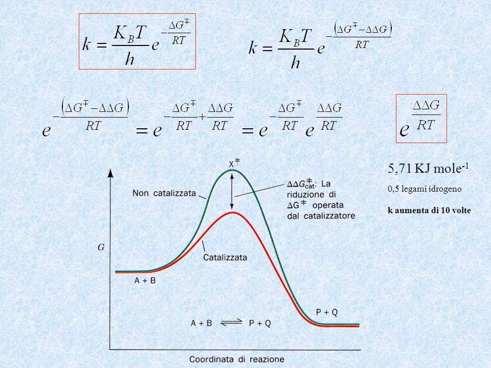 5,71 KJ mole-1 0,5 legami idrogeno k aumenta di 10 volte