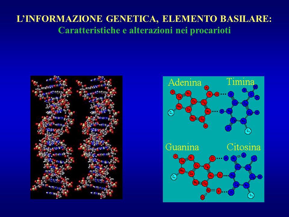 L'INFORMAZIONE GENETICA, ELEMENTO BASILARE: