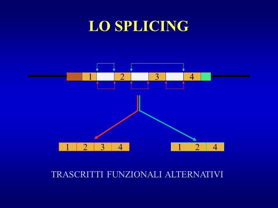 LO SPLICING 1 2 3 4 1 2 3 4 1 2 4 TRASCRITTI FUNZIONALI ALTERNATIVI