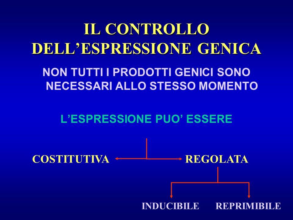IL CONTROLLO DELL'ESPRESSIONE GENICA