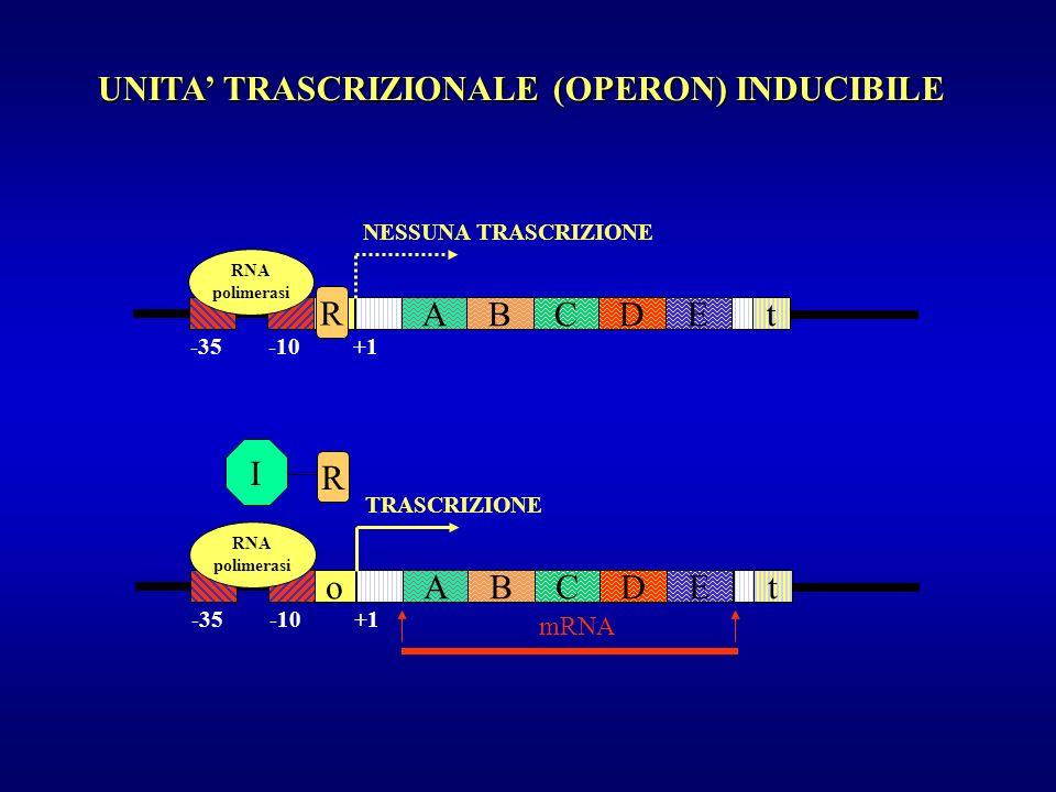 UNITA' TRASCRIZIONALE (OPERON) INDUCIBILE