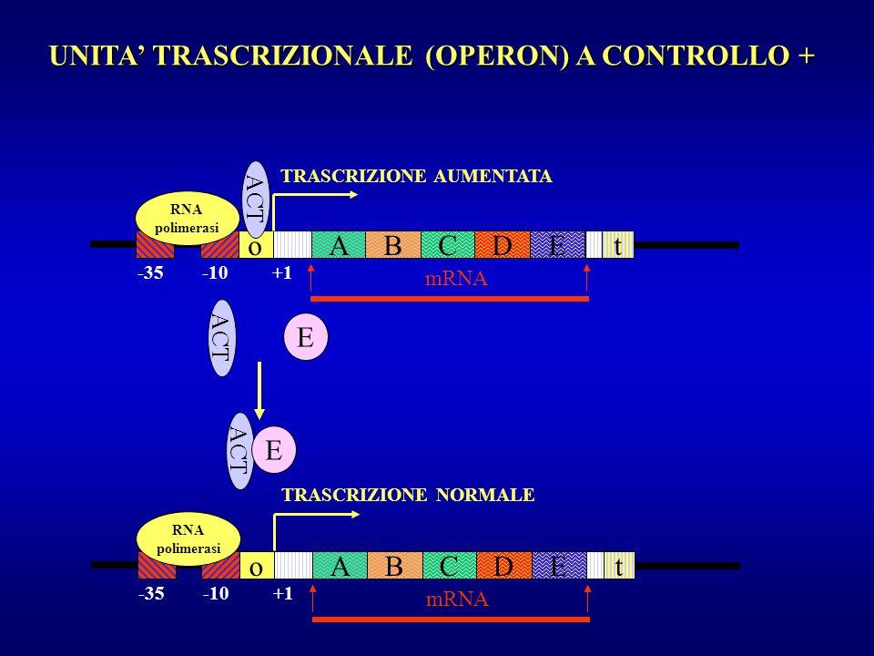 UNITA' TRASCRIZIONALE (OPERON) A CONTROLLO +