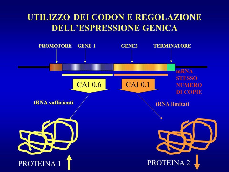 UTILIZZO DEI CODON E REGOLAZIONE DELL'ESPRESSIONE GENICA